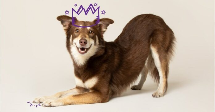 kumarrus-koira-kuva-edgar-and-cooper